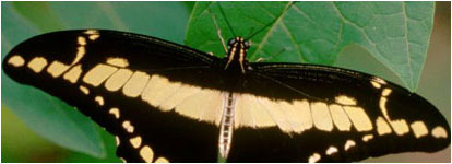 Photograph of Butterfly